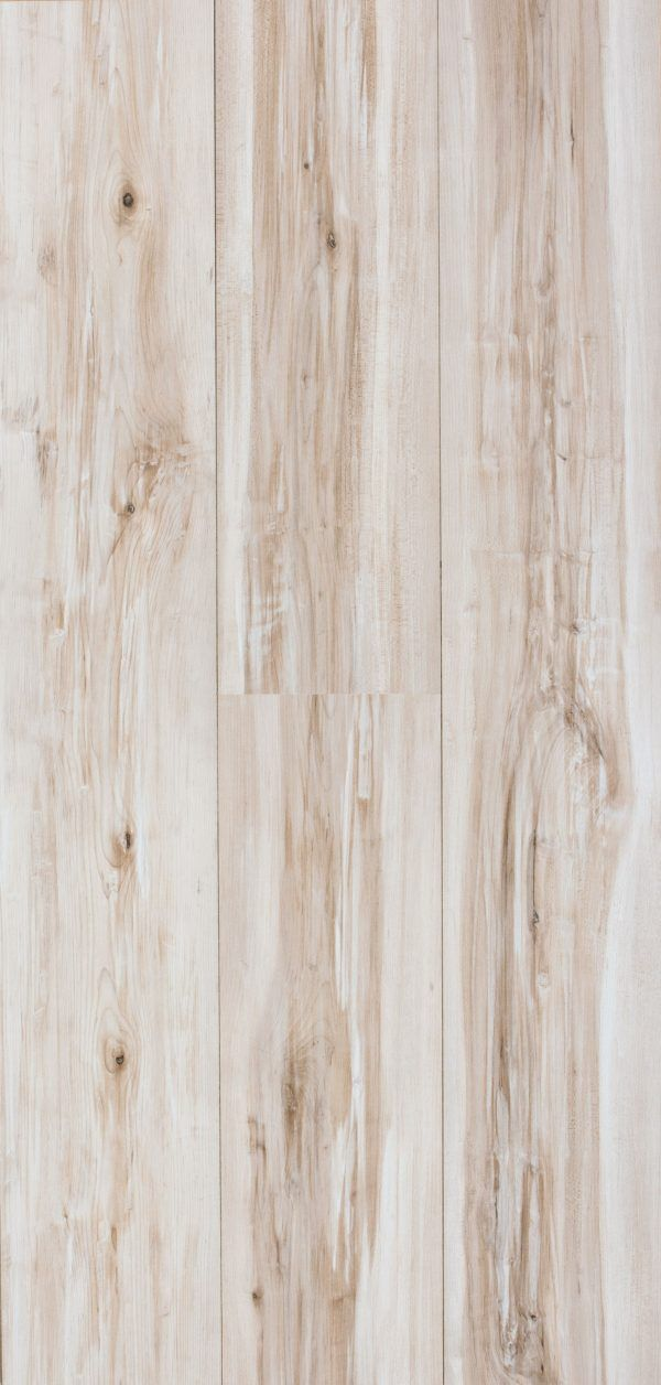 Klon bielony Whitepainted Maple 1 st 645671