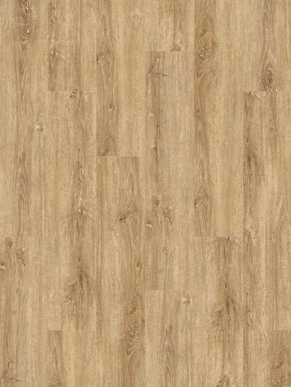 Chalk Oak