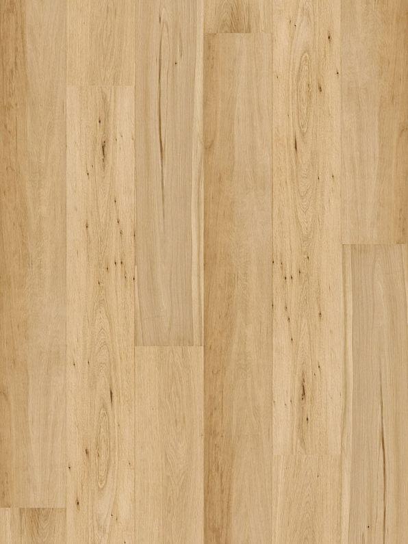 Royal Oak Dąb ABCD