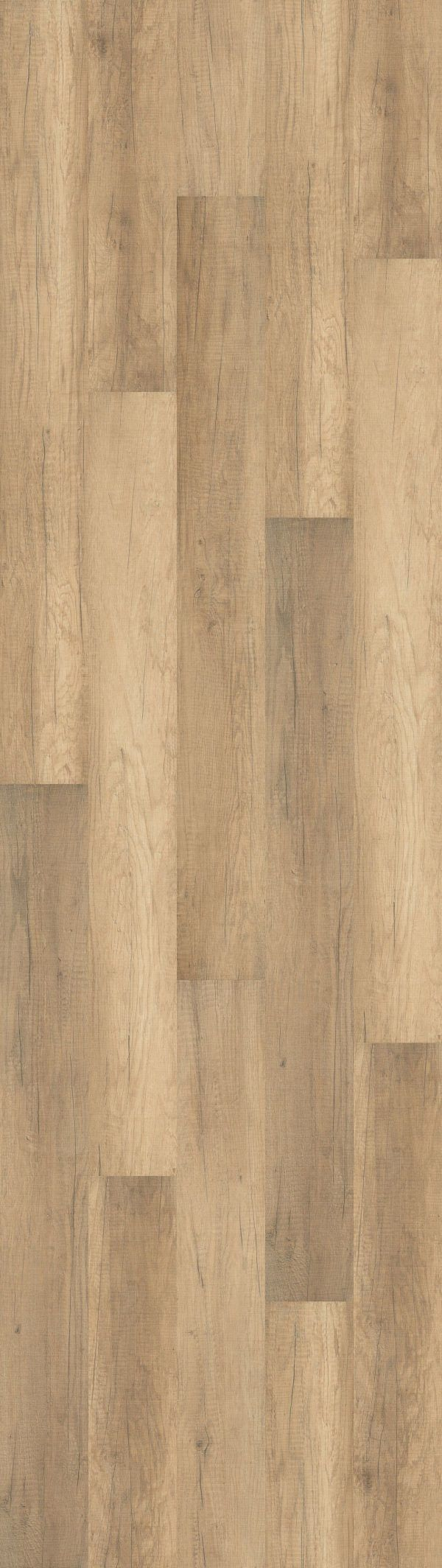Welsh Pale Oak